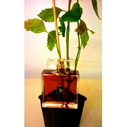 1 PATCHOULI PUR 100ML + 1 PLANTE DE PATCHOULI (Flacon Luxe)